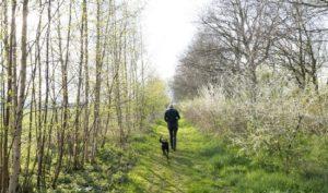 Wandelen met de hond in het voorjaar