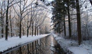 Beekje in de winter - wijbosch-broek